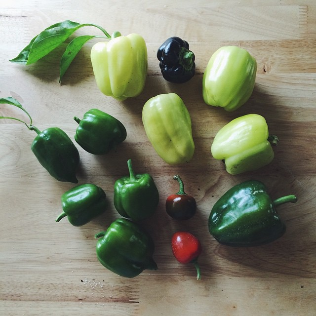 no_peppers_all_summer__haven_t_checked_on_or_watered_my_garden_in_weeks__and_then_BOOM._October__you_re_weird.